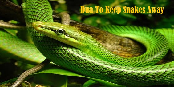 Dua To Keep Snakes Away – Wazifa To Get Rid Of Insects, Bugs