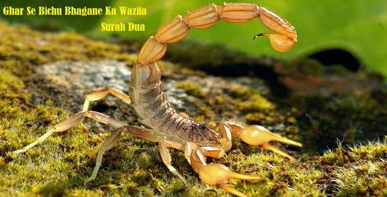 Ghar Se Saanp Bichu Bhagane Ke Liye wazifa